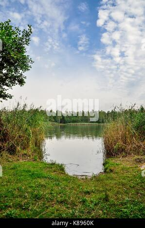 Beautiful summer landscape. Green grass and blue sky at the lake.