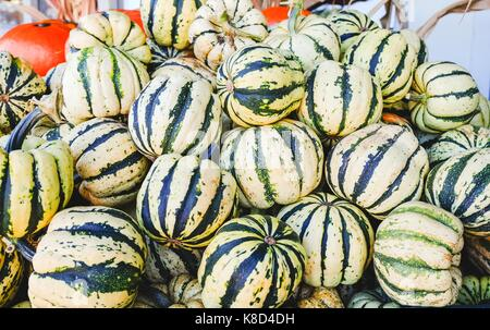 Colorful Squash in a container at fresh market - Stock Photo