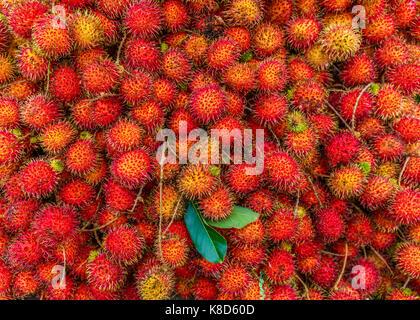 Fresh Ripe Rambutan the Popular Juicy Sweet Tropical Fruit Full of Vitamin in Asia Serving as Healthy Food. - Stock Photo