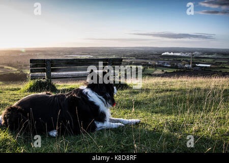 A border collie sat by a bench - Stock Photo