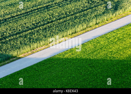 Road through green agricultural fields - Stock Photo