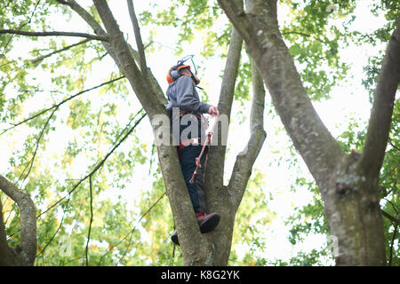 Young male trainee tree surgeon looking up from tree trunk - Stock Photo