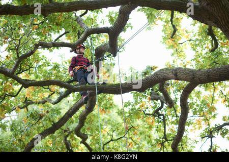 Trainee teenage male tree surgeon standing on tree branch - Stock Photo
