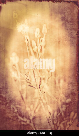 Textured Antique Image of Wildflowers in Colorado - Stock Photo