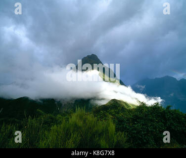 New Zealand. Milford Sound. Low level cloud over mountain. - Stock Photo