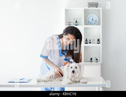 Beautiful smiling veterinarian doctor examining cute white dog in clinic - Stock Photo