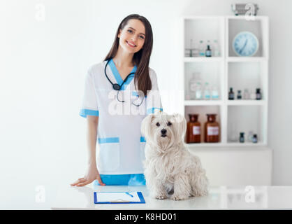 Beautiful smiling veterinarian doctor and cute white dog in vet clinic. Pet care - Stock Photo