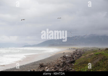 Scenic view of birds flying over beach against cloudy sky - Stock Photo
