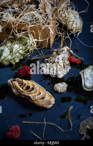 Oysters in a box, seafood market. Close up. - Stock Photo