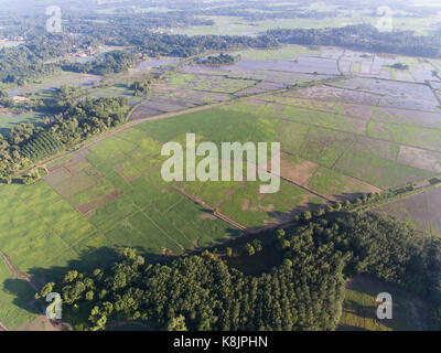aerial photo of paddy field in the morning at kota bharu,kelantan,malaysia.agriculture concept - Stock Photo