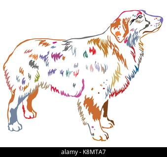 Colorful contour decorative portrait of standing in profile dog Australian shepherd, vector isolated illustration - Stock Photo