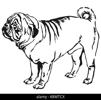 Decorative contour portrait of standing in profile pug dog, vector isolated illustration in black color on white - Stock Photo