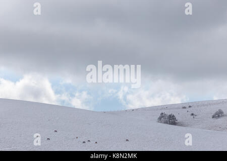 A mountain covered by snow with distant horses, beneath a nearly overcast sky - Stock Photo