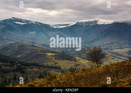 tree on hillside in late autumn gloomy day. high mountain ridge with snowy tops in a distance under overcast sky - Stock Photo