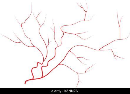 Blood Vessels Veins And Arteries Vector Illustration Stock Vector