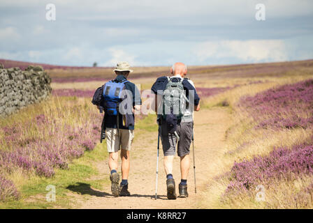 Mature male hikers on The Cleveland Way National Trail in The North York Moors National Park. North Yorkshire, England. - Stock Photo