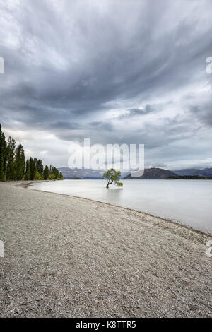 A tree in Lake Wanaka, New Zealand - Stock Photo