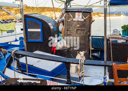 Samos island, Greece - September 18, 2016: Two goat on Fishing boat at Pythagorion/Pythagoreio - Stock Photo