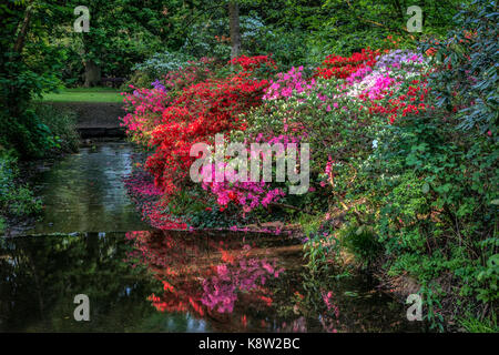Springtime in the Woodland Gardens, Bushy Park, London, UK. Colorful red & pink Azaleas beside a small stream beautifully - Stock Photo