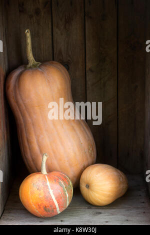 Pumpkins and squashes of different varieties in a wooden box. Autumn background. Rustic style, selective focus. - Stock Photo