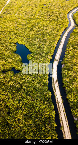 Aerial view of a dirt road running through flooded mangrove forest - Stock Photo