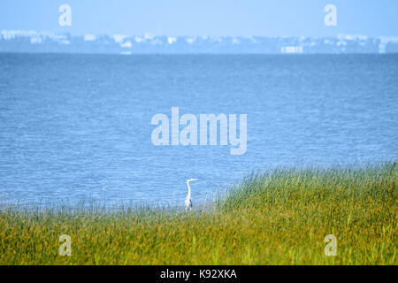Stork hides in tall grass on sea shore - Stock Photo