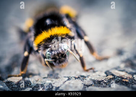 Macro Closeup of a Bee at a Nature Reserve - Stock Photo
