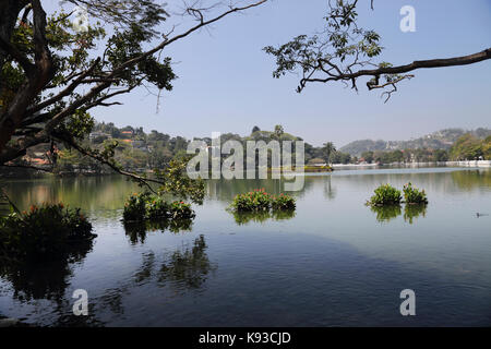 Kandy Sri Lanka Kandy Lake Kiri Muhuda By Temple of the Sacred Tooth Relic - Stock Photo