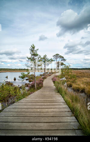 wooden boardwalk nature trail through wetlands - Stock Photo