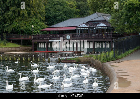 Swans and ducks on Waterloo Lake, Roundhay Park, Leeds - Stock Photo