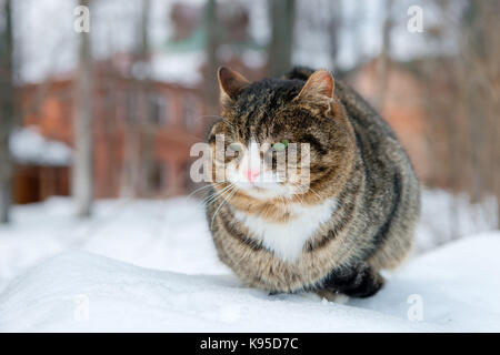 Angry green-eyed cat napping in the snow winter day - Stock Photo