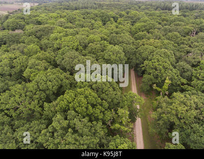 Aerial view of a walking path in the middle of green oak woodland in New Forest, United Kingdom . - Stock Photo