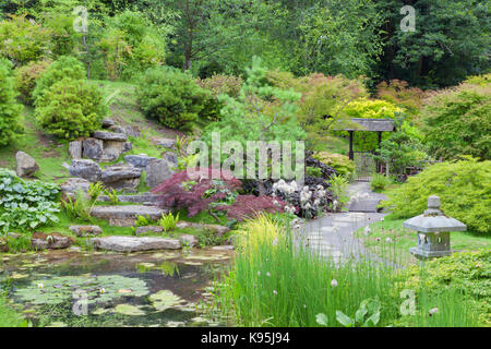 Oriental style rock garden with a small pond, stone lantern surrounded by pine, conifer, maple trees and shrubs .