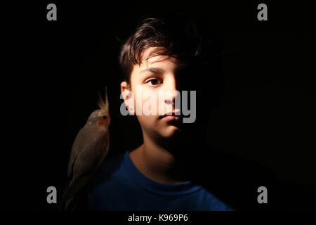 Cockatiel on shoulder of boy - Stock Photo
