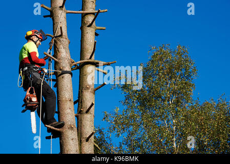 Lumberjack with saw and harness climbing a tree - Stock Photo