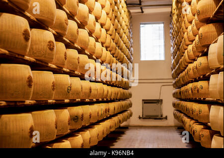 Whole Parmigiano-Reggiano cheeses sit on storage racks during the aging process - Stock Photo