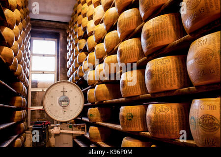 Whole Parmigiano-Reggiano cheeses sit on storage racks during the aging process next to big balance to weight them - Stock Photo