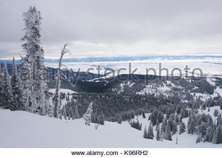 Winter scene with snow and rime covered trees in the mountains. - Stock Photo