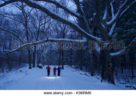 A woman and her teen daughter and son cross-country ski beneath fresh snow covered trees in twilight with headlamps - Stock Photo