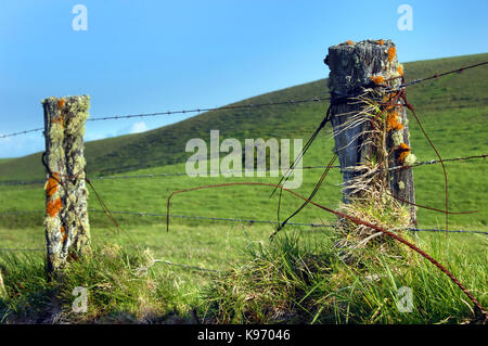 Upcountry fence on the Big Island of Hawaii is overgrown with lichen and mosses.  Barbed wire fences surround the - Stock Photo