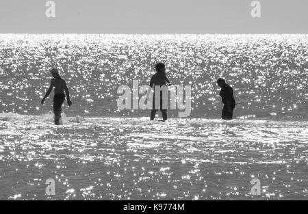 Three bathers check the shallow glistening water of Sanibel, Florida for seashells. - Stock Photo