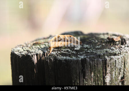 Leaf on a stump. - Stock Photo