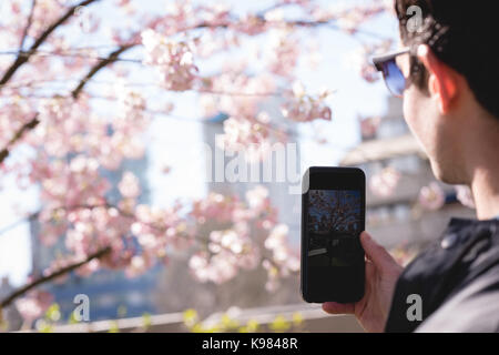 Man taking photo of cherry blossom with mobile phone in park - Stock Photo