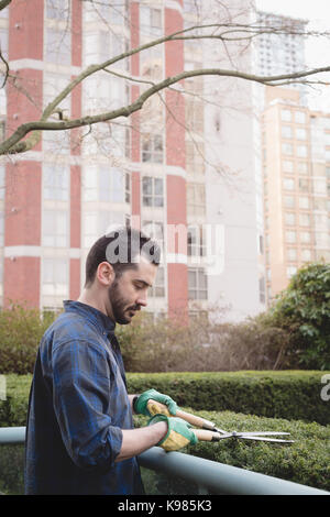 Side view of man cutting the hedges in the garden - Stock Photo
