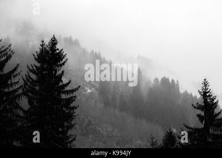 Various layers of trees and plants on a mountain side in the midst of fog - Stock Photo