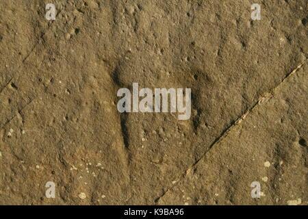 Stonehenge Ancient Dagger Carvings on Sarsens - Stock Photo
