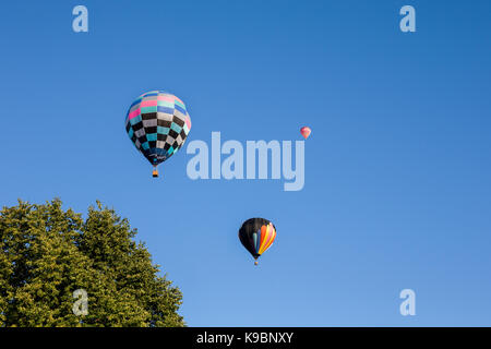 Three colorful hot air balloons set against a clear blue sky.  Tree in foreground for added interest and scale. - Stock Photo