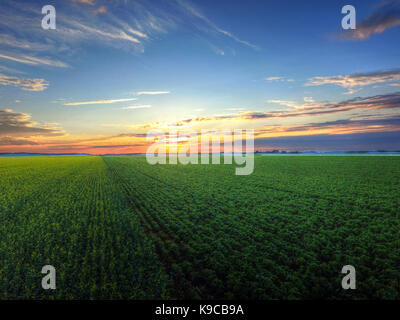 Aerial view of sunset over canola and soybean field - Stock Photo