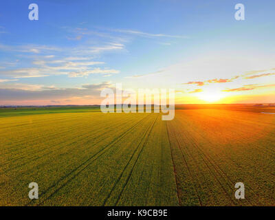 Aerial view of sunset over canola field - Stock Photo