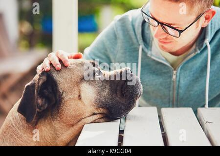 Devoted look of the huge dog. Friendship between young man and cane corso dog. - Stock Photo